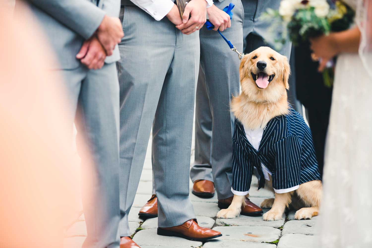 Golden Retriever Wedding
